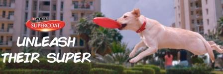 Order Free Sample Meal for DOG & CAT